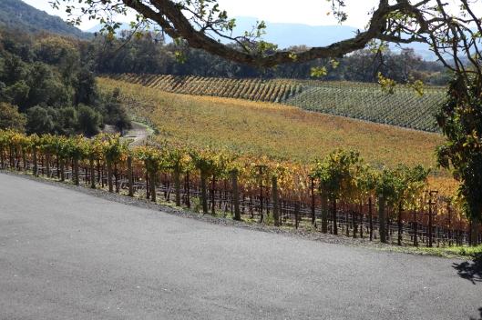 The Palmaz Winery fields at Napa Valley
